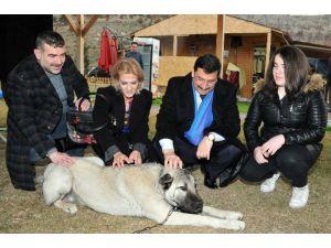 Keçiören Belediyesi'nden Sokak Hayvanlarına Kuru Mama