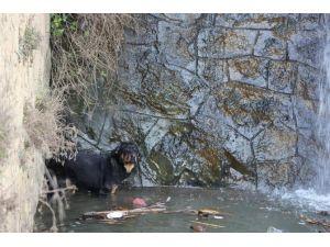 Derede Mahsur Kalan Köpek Kurtarıldı