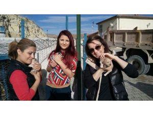 Hayvanseverlerden Avanos'a Tam Not