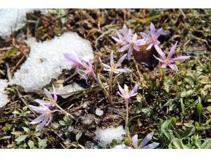 Oltu'ya İlkbahar Geldi