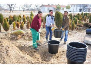 Karaman Belediyesi Fidanlığında Yaz Hazırlığı Başladı