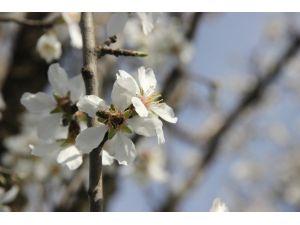 Edirne'de Ağaçlar Yalancı Bahara Aldandı