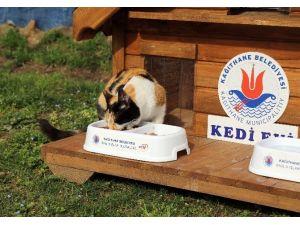 17 Şubat Dünya Kediler Günü Kağıthane'de Kutlandı