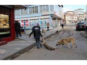 Oltu'da Sokak Köpekleri Korku Saçıyor