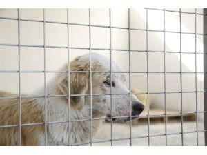 Banaz Belediyesi Hayvan Bakımevi Faaliyete Geçti