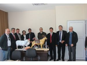 Sokak Hayvanları İçin Kurulan Komisyon Ceyhan'da