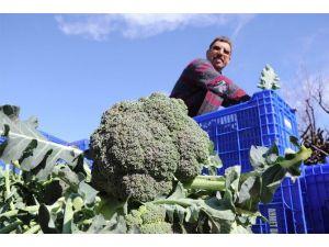 Alternatif Sebzenin Sultanı Brokoli