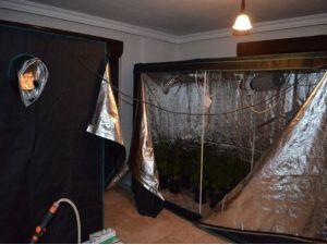 Seraya Çevrilmiş Evin Odasında Kenevir Üretimi