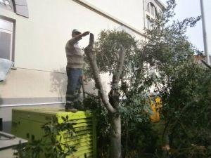 Alaşehir Belediyesi'nden Cami Bahçelerinde Çevre Düzenlemesi
