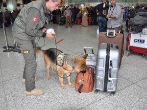 Atatürk Havalimanı'nda köpekler görev başında