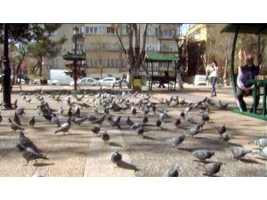 Gazianteplilerin Güvercin Keyfi
