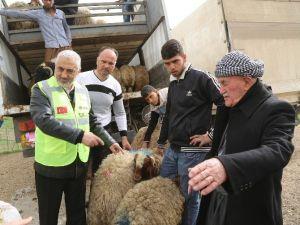 Kuzey Irak'taki Sığınmacılar İçin Koyun Yetiştiriciliği Projesi Başlatıldı