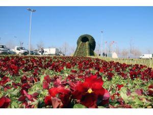 Yalova'ya Çiçek Şelalesi