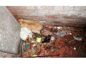Havalandırma Boşluğuna Düşen İki Köpeği İtfaiye Ekipleri Kurtardı