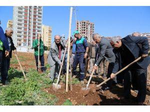 Mezitli'nin Jcaranda Koruluğu Genişliyor