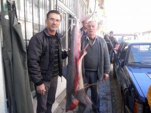 Ortaca'da Amatör Balıkçının Oltasına Köpek Balığı Takıldı