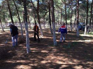 Didim'de Yabani Otlara Karşı Mücadele Başlattı