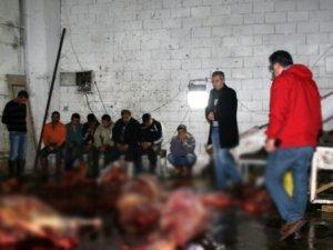 İzmir'de At Eti Operasyonu: 14 At Kesilmiş Halde Bulundu