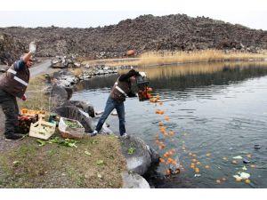 Iğdır'da Yaban Hayvanları İçin Yemleme Çalışması