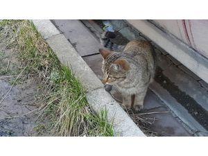 Kedi fare oyununa Artvinlilerden Cerattepe göndermesi