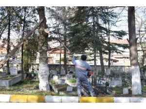 Mezarlıkta Ağaç Budama Çalışmaları Başlatıldı