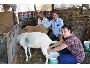 Ödemiş'teki Üreticilerden 'Koyun Ve Keçi Festivali' Girişimi