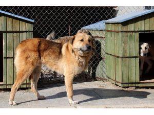 Çankaya Belediyesi'nden Sokak Hayvanlarına Şefkat Eli