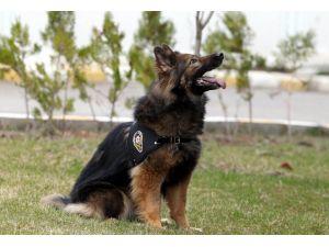 Emniyet bugüne kadar 3000 görev köpeği yetiştirdi