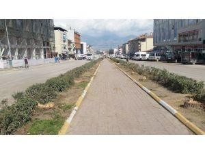 'Yeni Erbaa' projesi için çam ağaçlarını kestiler