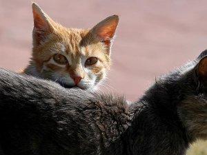 Fransa'da evinde 113 kedi besleyen kadın yargılanıyor