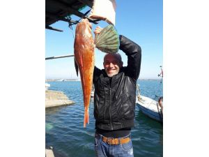 "Dev ""Uçar Balığı"" Fatsa'da Ağlara Takıldı"