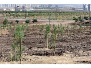 Belediyenin 'Kent Ormanı' İtirazı Reddedildi