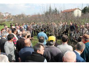 103 Çiftçiye Budama Eğitimi