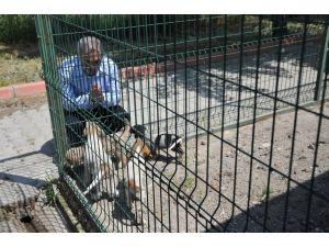 Sokak hayvanlarına sahip çıkan Osmaniye Belediyesi'ne teşekkür plaketi