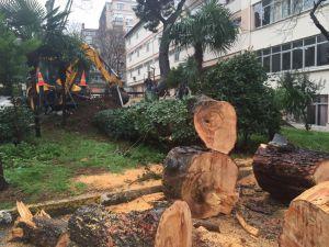 Şiddetli yağış ağaç devirdi
