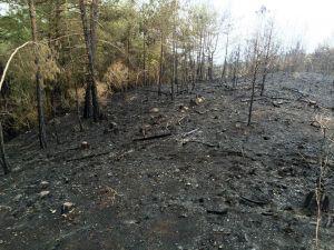Amanoslarda 10 hektar kızılçam ormanı yandı