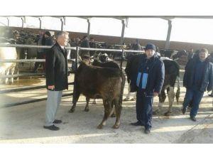 Bolvadin Bölgesel Hayvan Pazarı Tekrar Hizmete Açıldı