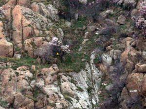 Tarihi Kaleden Düşen Şemsiyesini Almak İçin Kayalıklara Tırmandı