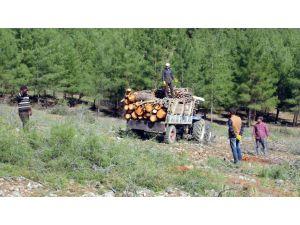 Kahramanmaraş'ta taş ocağı için binlerce ağaç feda edildi