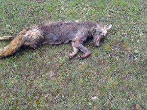 Bursa'da Vahşet! Piknik Alanında Hayvan Ölüleri Bulundu