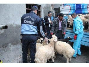 Kent Merkezindeki Hayvanlar Şehir Dışına Tahliye Ediyor