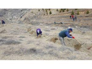 Korkuteli'de 65 Bin Fidan Toprakla Buluştu
