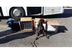 Jandarmadan Köpekli Kaçak Sigara Operasyonu