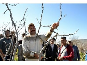 Siirt'te Tarımda Kurumlar Arası İşbirliği İle Daha Kaliteli Verim Elde Edilmesi Amaçlanıyor