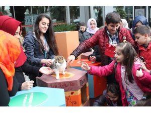 Üsküdarlı Gençlerden Sokak Kedilerine Rengarenk Yuvalar