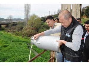 Beydağlı Süt Üreticileri, Sütlerini Küçükmenderes'e Döktü
