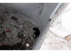 Tekirdağ'da Kedi Kurtarma Operasyonu