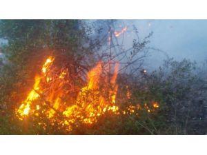 Manavgat'ta Ormanlık Alanda Çıkan Yangın Kontrol Altına Alındı