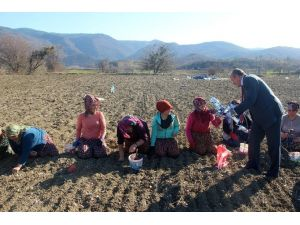 Başkan Arslan, Kadınlar Gününde Sarımsak Tarlasında Çalışan Kadınlara Pasta Kesti