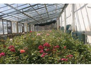 Yüz Binlerce Çiçek Toprakla Buluşturulacak
